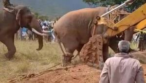 No intention to turn Chinnathambi into a kumki TN Forest Dept to Madras HC