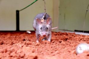 Telangana govt bans glue traps for rodent control