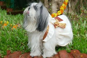 In pics This pet store in Kerala is selling Onam outfits for pets